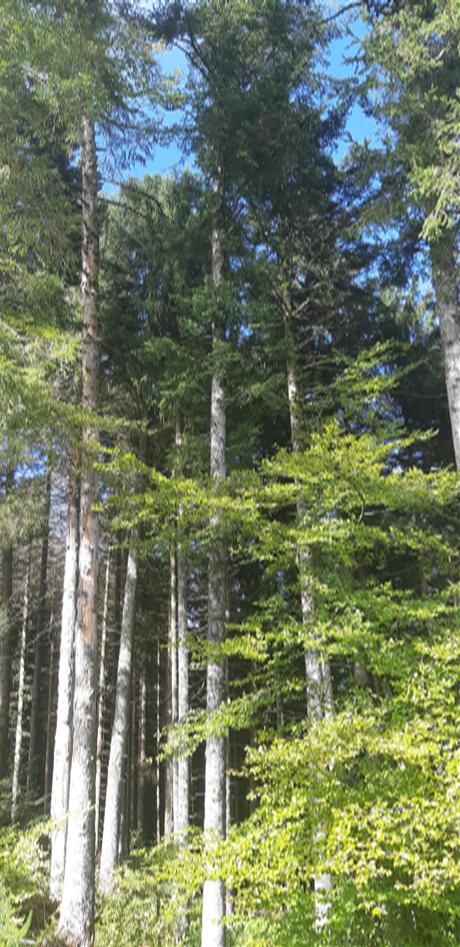 Plantons des arbres pour le centenaire du SI