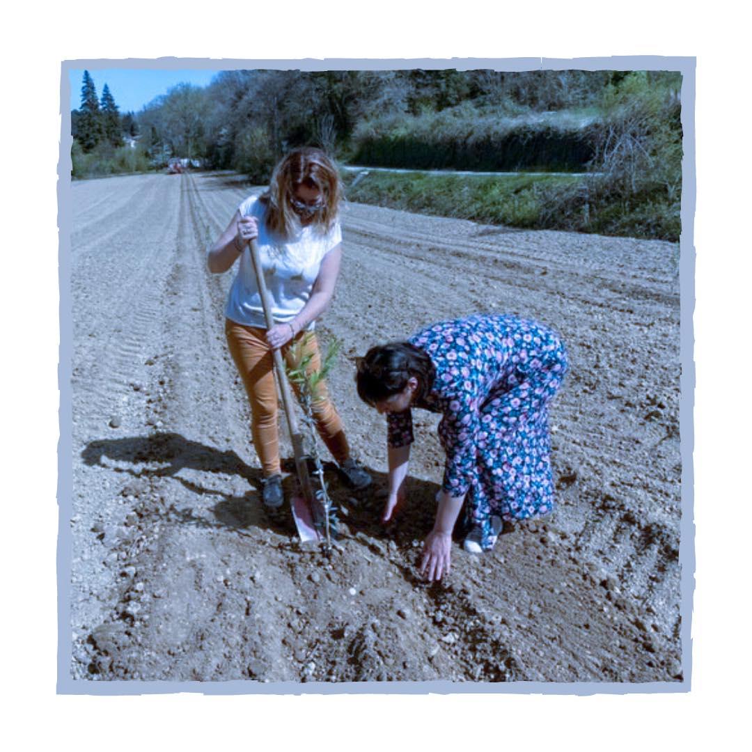 Plantation d'un olivier en Lubéron par le e-club Suzanne Noël